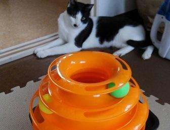 お留守番中でも猫が飽きないおもちゃを発見!