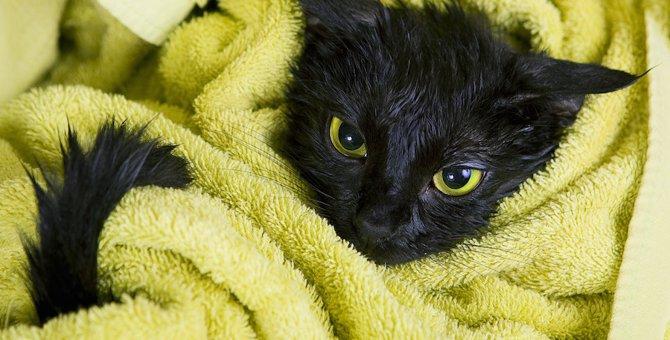 猫が溺れたときにはどうすれば良い?