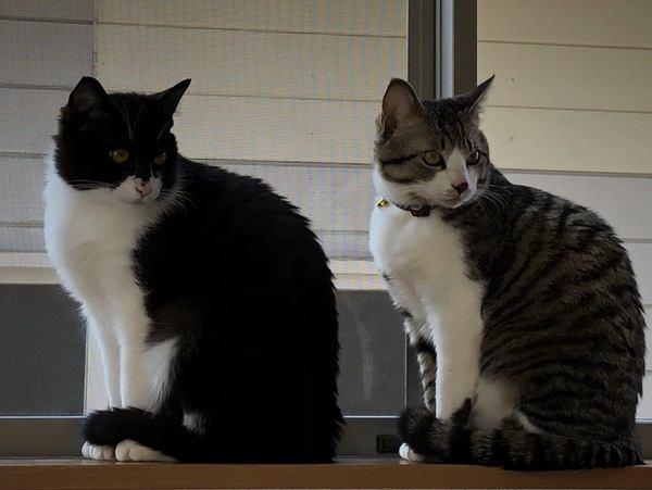 かわいい!猫同士の行動がシンクロする理由