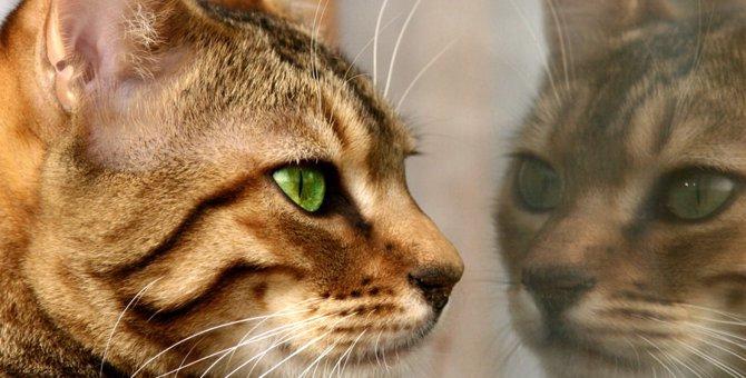 フェレンゲルシュターデン現象の真実 猫と霊の関係