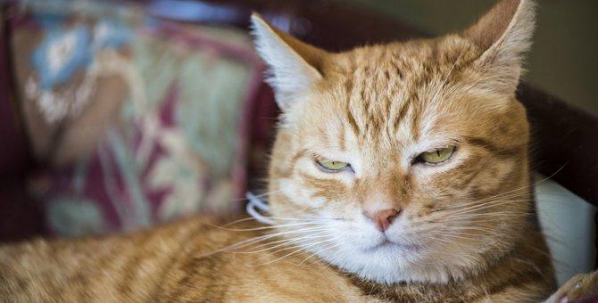 猫がドン引きしている『飼い主の行動』4つ