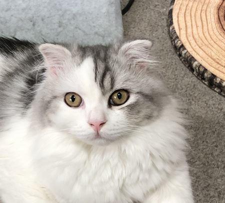 猫が飼い主を見つめる時の心理5つ