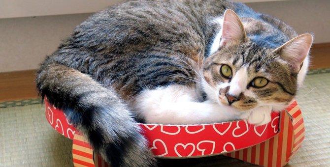 猫がしっぽをパタパタさせている時の5つの気持ち