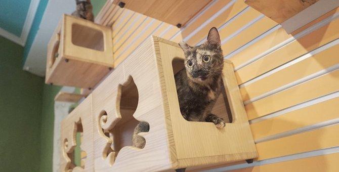 浅草の猫カフェおすすめ3選!抱っこ可や子連れで入れるお店も