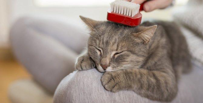 猫のノミやダニの予防、駆虫の方法について