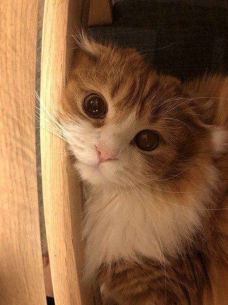 猫の「おかえり」5パターン