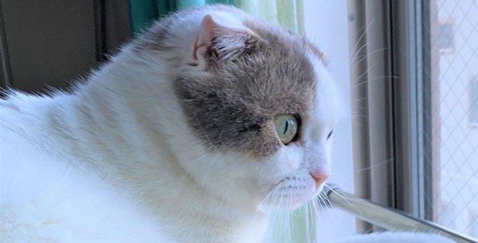 やっぱり完全室内飼いが安心♡意外に狭い猫の外での行動範囲