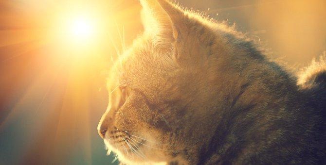 猫と暮らしたい人が持つべき『責任・覚悟』5つ!命を預かる重みを知って心構えを!