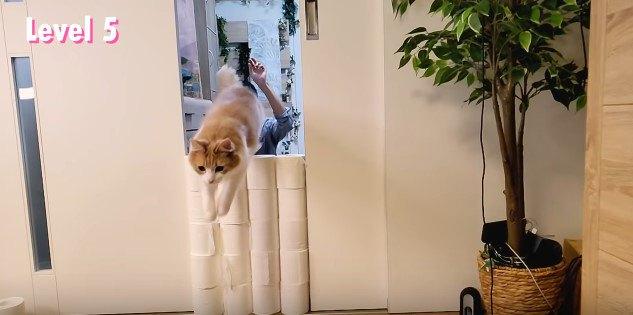 トイレットペーパーの品薄も解消したことだし…猫とおうちで遊ぼう!