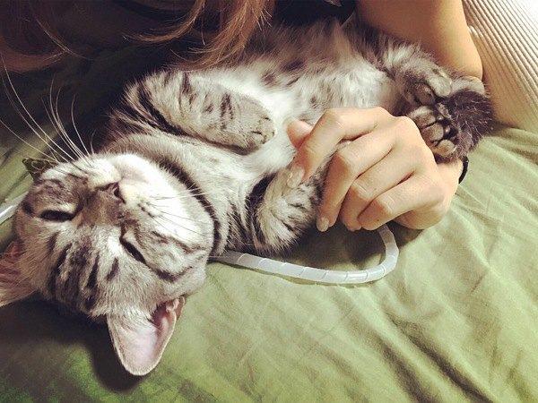 猫が一緒に寝たがる理由5つ