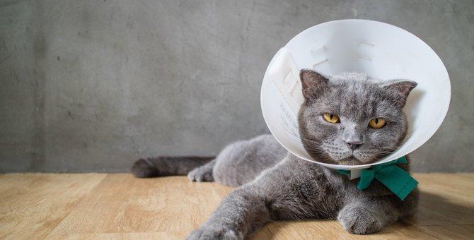 エリザベスカラーは猫が寝るときは外すべき?装着時の対処法