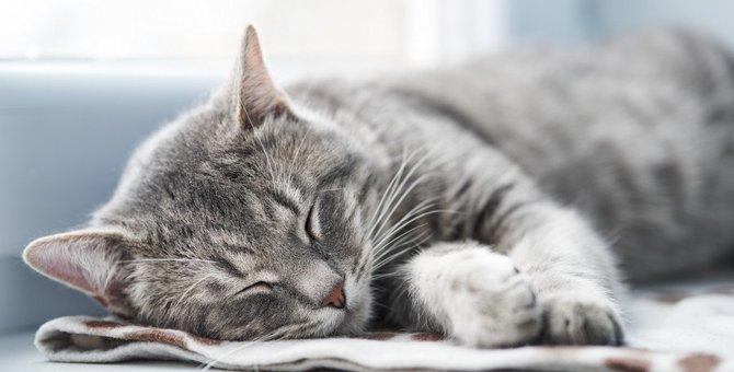 猫を短命にするかもしれない飼い方5つ