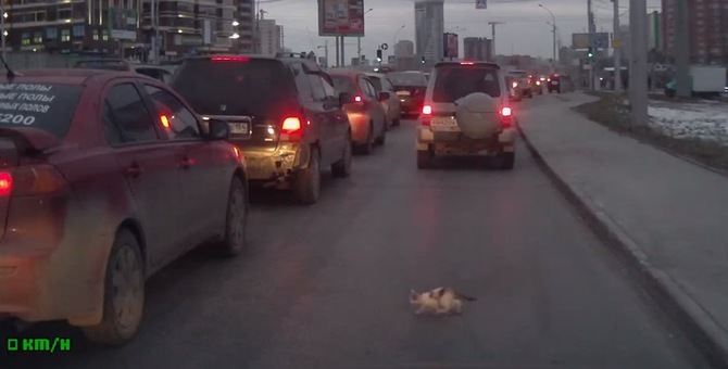 轢かれるっ!車によちよち近づく子猫ちゃん…危機一髪の救出劇です