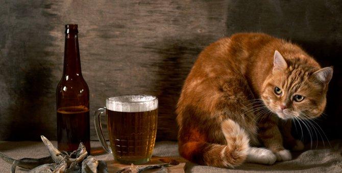 猫にビールを絶対に与えてはいけない理由