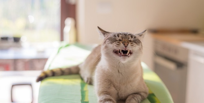 猫がため息をする4つの理由とその時の気持ち
