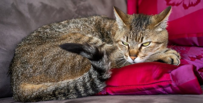 猫が『居心地が悪い』と感じる環境5つ