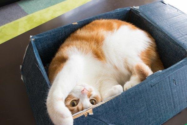 猫にダンボールでできたおもちゃをあげよう!オススメ3選