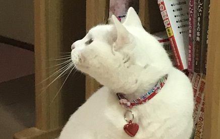 猫に『首輪』は必要なの?