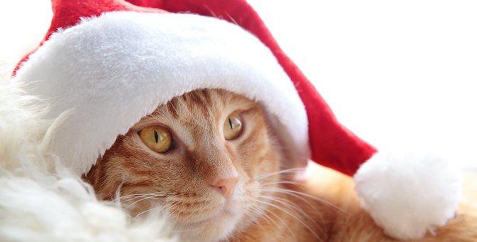 愛猫をサンタに!おすすめ商品とコスプレをさせる時の注意点