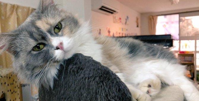 【家族に迎える選択肢のひとつに】「保護猫カフェ マンチカン」さんにインタビュー♪