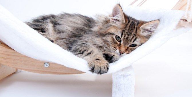 洗濯ネットは猫に万能!便利な5通りの使い方