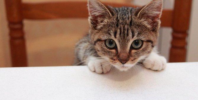 猫に『パン』を絶対与えてはいけない理由4つ!与えてしまった際に出る危険な症状とは