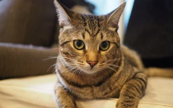 猫に好かれたいなら絶対にやってはいけないこと4つ