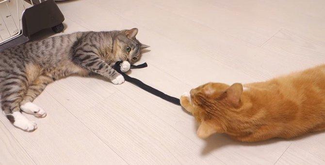 1つの紐を仲良く半分こ!猫ちゃん2匹で同時に遊ぶナイスなアイデア