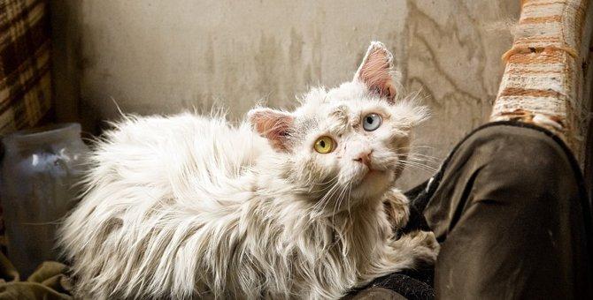 猫の毛が『パサパサ』になる5つの原因と対処法