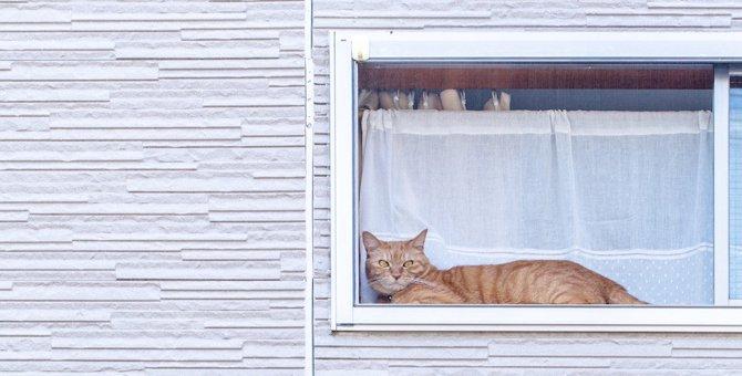 猫にお留守番をさせる時にしておく9つのこと