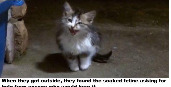 土砂降りの雨、助けを求めて鳴き続けた子猫...