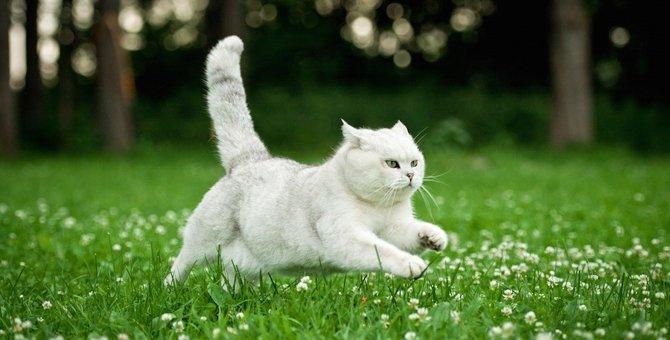 猫が突然走る4つの理由と注意したい事