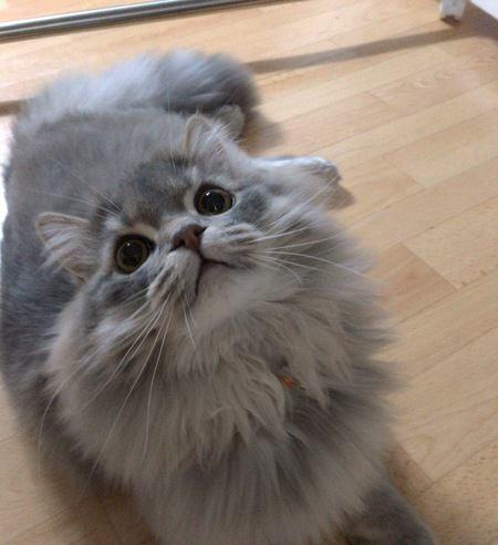 猫がかわいいのはなぜ?4つの理由