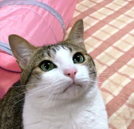 猫が飼い主をじっと見て鳴いているときの心理3つ
