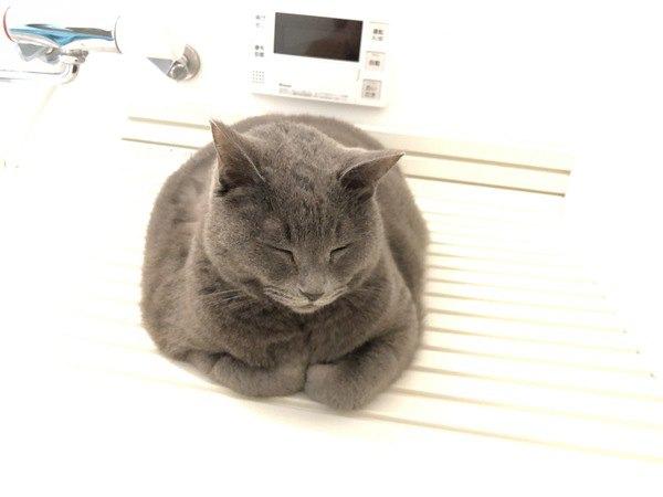 猫がバスルームにいる理由5つ