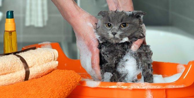 毛の量が多い猫にはどんなお手入れが必要?