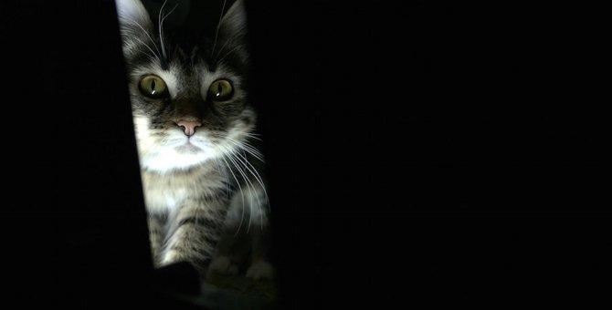 猫が夜中に飼い主の顔を覗き込む心理とは