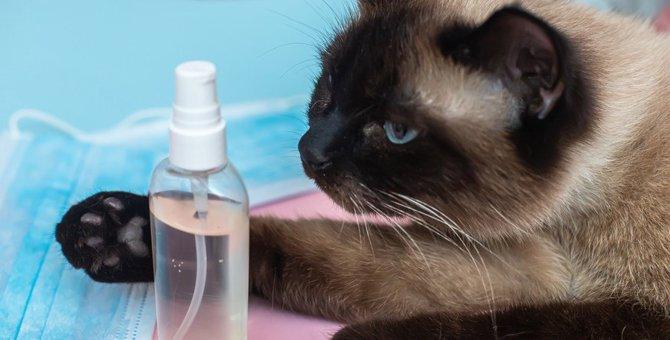 猫にアルコールはNG!手を消毒したときに絶対に気を付けるべきこと5つ