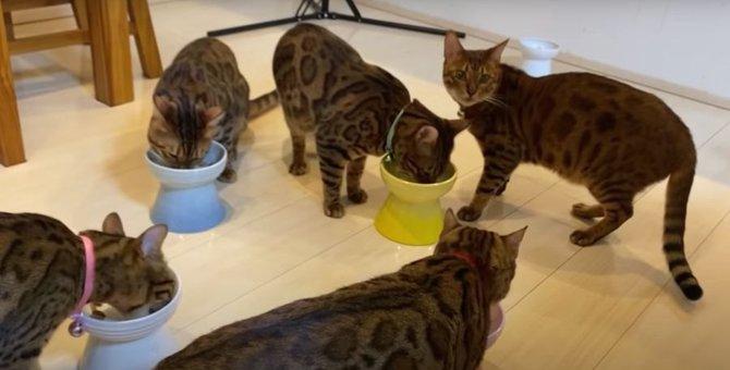ウェットフードに大興奮!食べっぷりのいい猫さんたち!