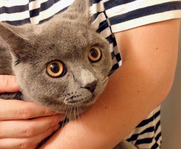 猫が飼い主を独り占めする時にさりげなくやっている行為5つ