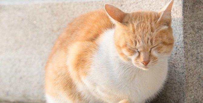 猫に日光浴は必要?効果と正しい方法