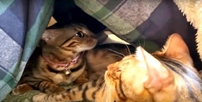『可愛さ混雑中♡』飼い主さんの足の下に集まる猫さんたち!