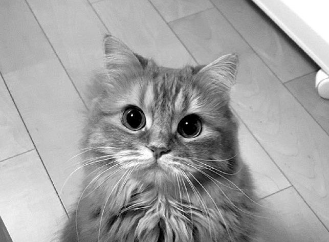 『かっこよくなる』は嘘だった…可愛さが勝ってしまう猫が大人気♡