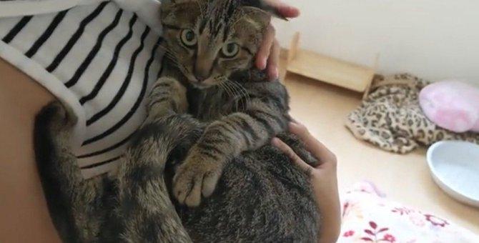 抱っこの相手で態度を変える猫ちゃんの無慈悲さがツライ
