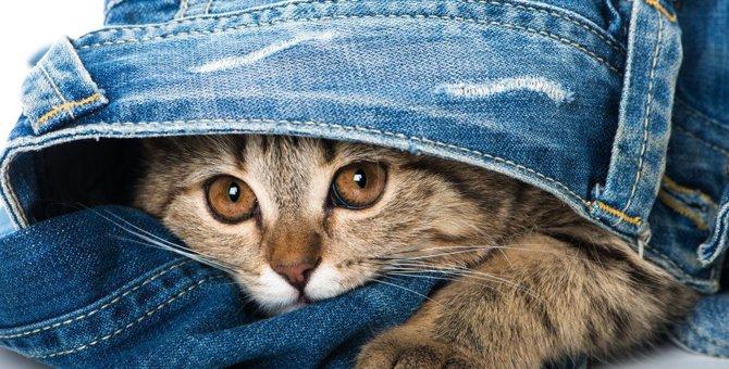 『嫉妬深い猫』の特徴5つ