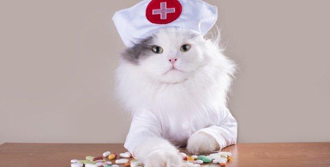 猫用の睡眠薬はある?服用する時の注意点
