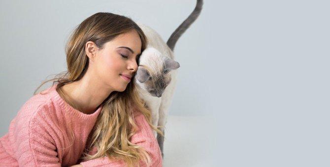 猫が飼い主以外に懐く理由とは?