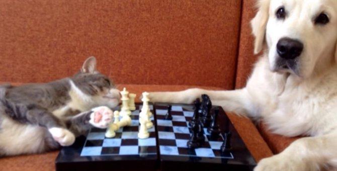 「勝負はいつ始まるんだろう」猫VS犬のチェス対決!?