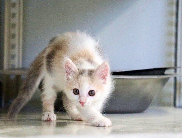 子猫は生まれてから1年でどのくらい成長するの?変化する4段階