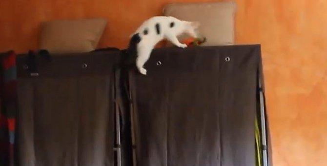 オモチャを取りに行く猫ちゃんの男気がすごい